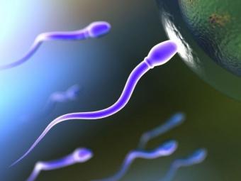 sperma2