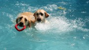 puppies_park-1831006710