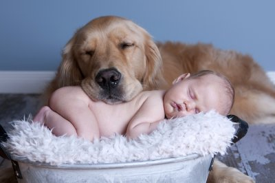 babies_dogs